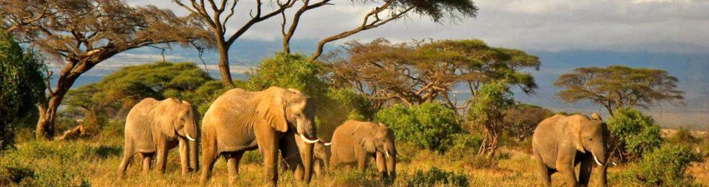 Il mio viaggio in Tanzania