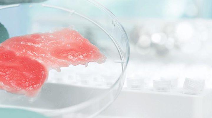 Tra pochi anni mangeremo carne sintetica?