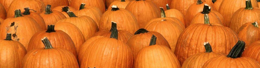 Per Halloween, un vero e proprio boom di zucche in Italia