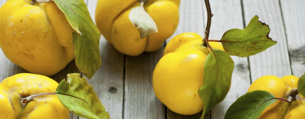 La mela cotogna, un frutto dimenticato da rivalutare