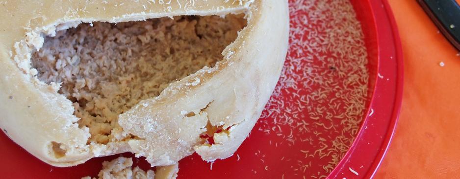 Casu Marzu: il proibito formaggio con i vermi