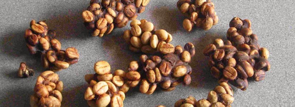 Kopi Luwak, il caffè più costoso al mondo