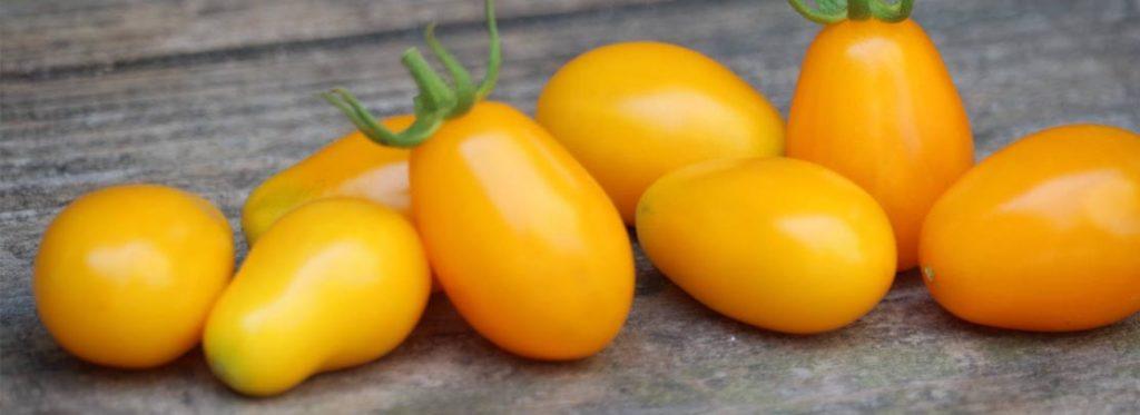 Pomodorino giallo l'oro del Vesuvio: vogliamo conoscerlo alla perfezione
