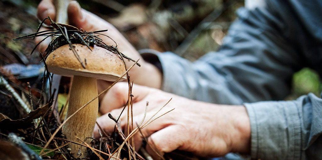 Funghi, grazie al maltempo è una stagione da record