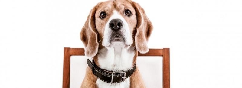 Dog friendly: i ristoranti che accettano e hanno proposte gustose per cani
