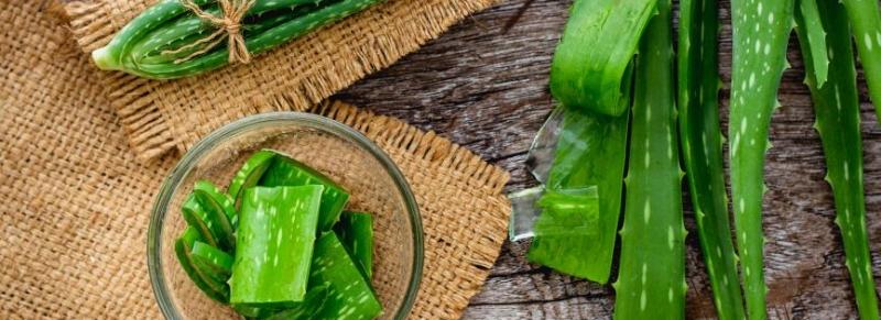 Aloe vera: in cucina e non solo, ecco tutti i suoi benefici
