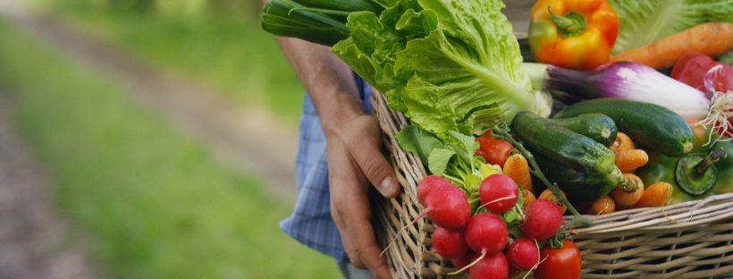 Cambiamenti climatici e cibo: cosa sta accadendo
