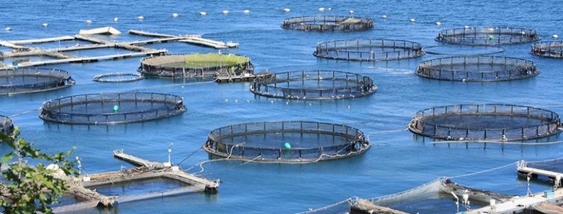 Pesce di allevamento o pescato? Consigli per scegliere i prodotti migliori da portare in tavola