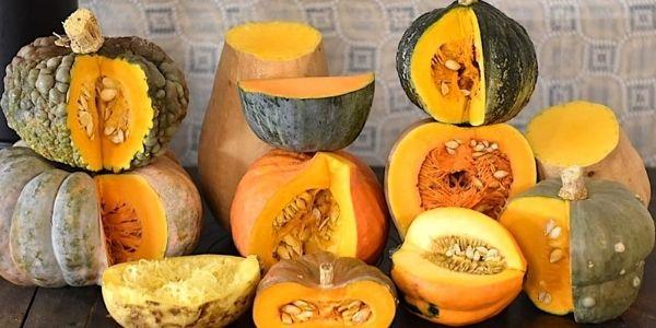 Zucca: variante e differenze e la famosa Dellica