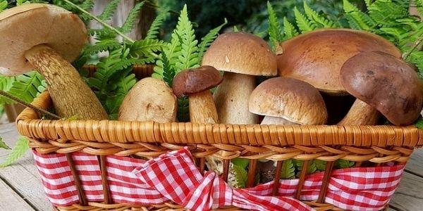 Come trovare funghi e raccoglierli: il decalogo del cercatore
