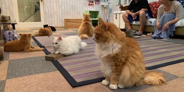 Animal cafè, i locali in cui puoi prendere il caffè con gatti o altri animali