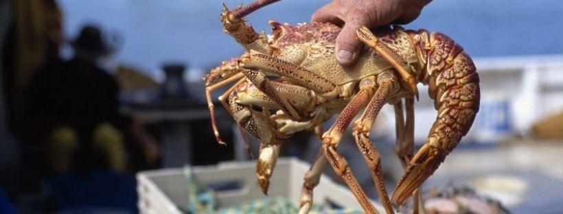La differenza tra astice e aragosta? Impariamo a riconoscerle