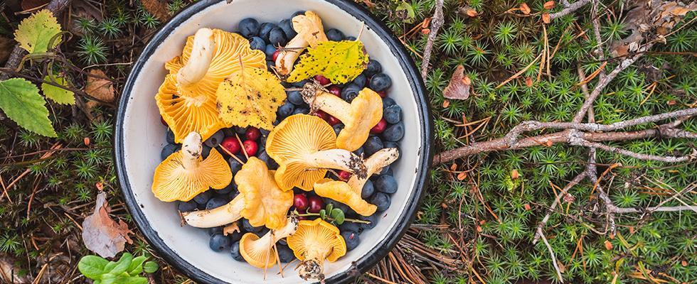 Foraging: conoscere, raccogliere e cucinare cibo selvatico