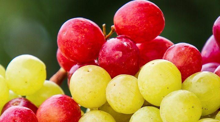 Uva: guida completa sull'uva da tavola e l'uva da vino
